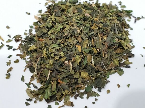 Stinging Nettle Leaf Tea (Urtica Dioica) Organic Non-GMO + 2500 Viable Seeds USA