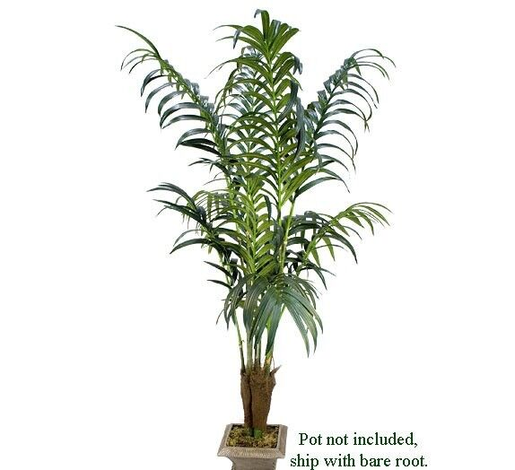 two 7 39 kentia palm artificial silk trees look real 66 33849526196 ebay. Black Bedroom Furniture Sets. Home Design Ideas