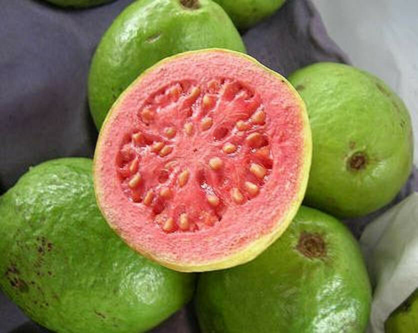 Guava Tropical Fruit Psidium Guajava Exotic Tree Seed
