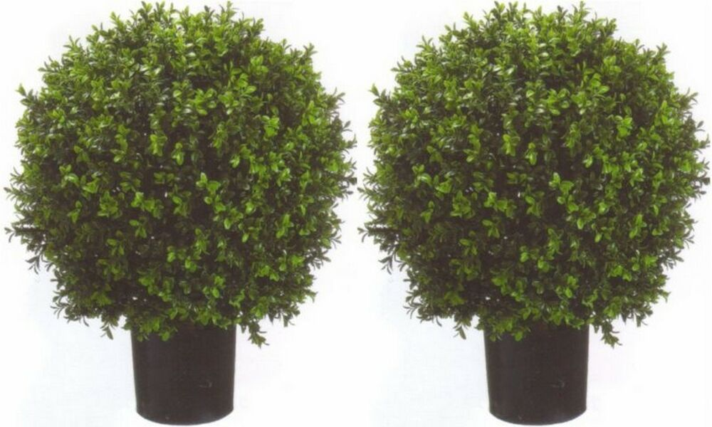 2 artificial 24 outdoor uv boxwood topiary tree plant for Outside plants and shrubs