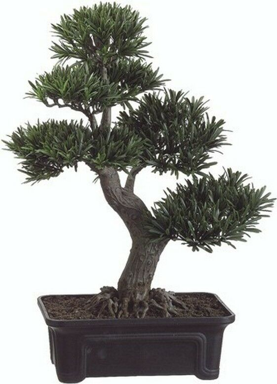 artificial bonsai trees uk with 150870272947 on Artificial Boxwood Hedge Set In Fibreglass Trough P66 also Ficus Benjamina Tree In Green Or Variegated Leaf P45 additionally VCK3066 A806386 likewise Aloe Vera 2ft 4 P33 likewise Gestalten Eigenen Steingarten.