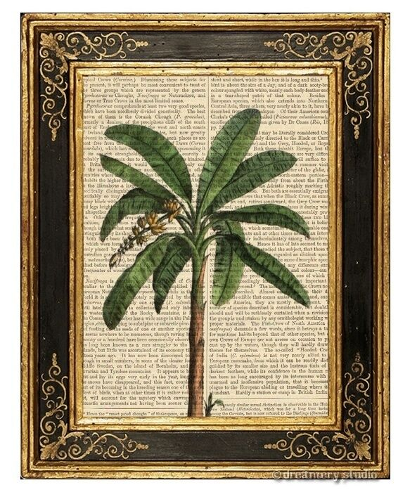 Banana Palm Tree Art Print On Antique Book Page Vintage