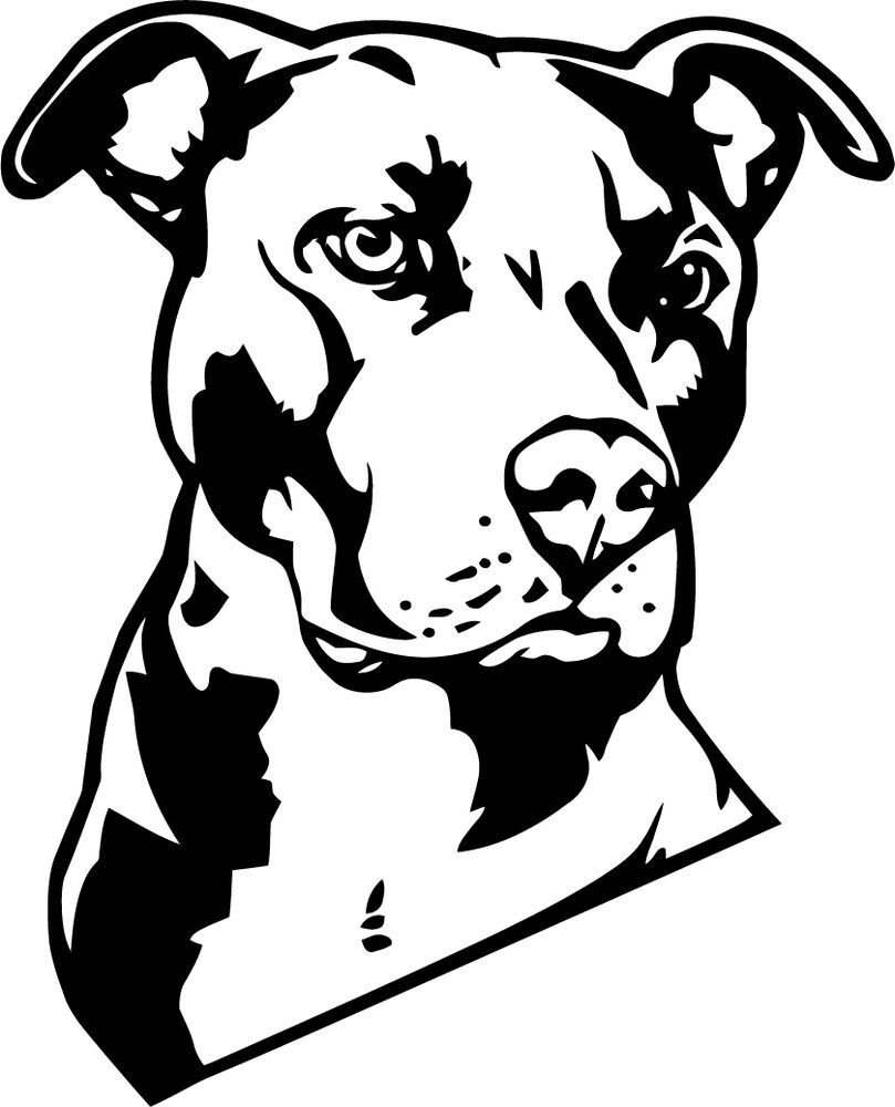 a large pitbull decal or vinyl cut sticker matte black