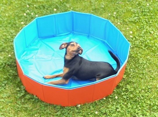 outdoor dog swimming pool hunde pool planschbecken 80 x 20 cm top 0002 ebay. Black Bedroom Furniture Sets. Home Design Ideas