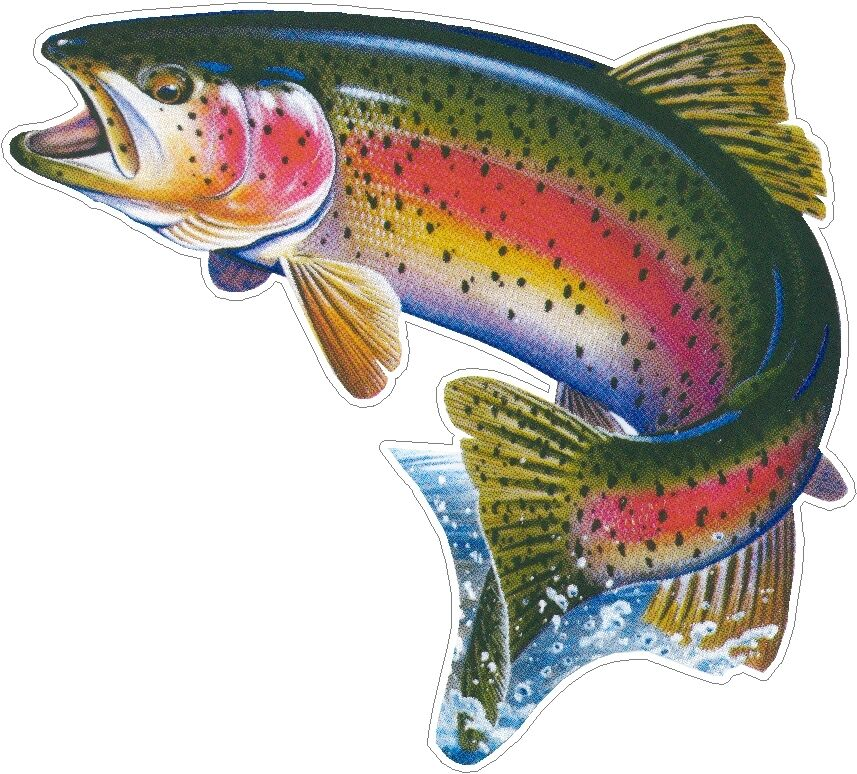 Trout fish fishing color vinyl decals bumper stickers for Free fishing stickers