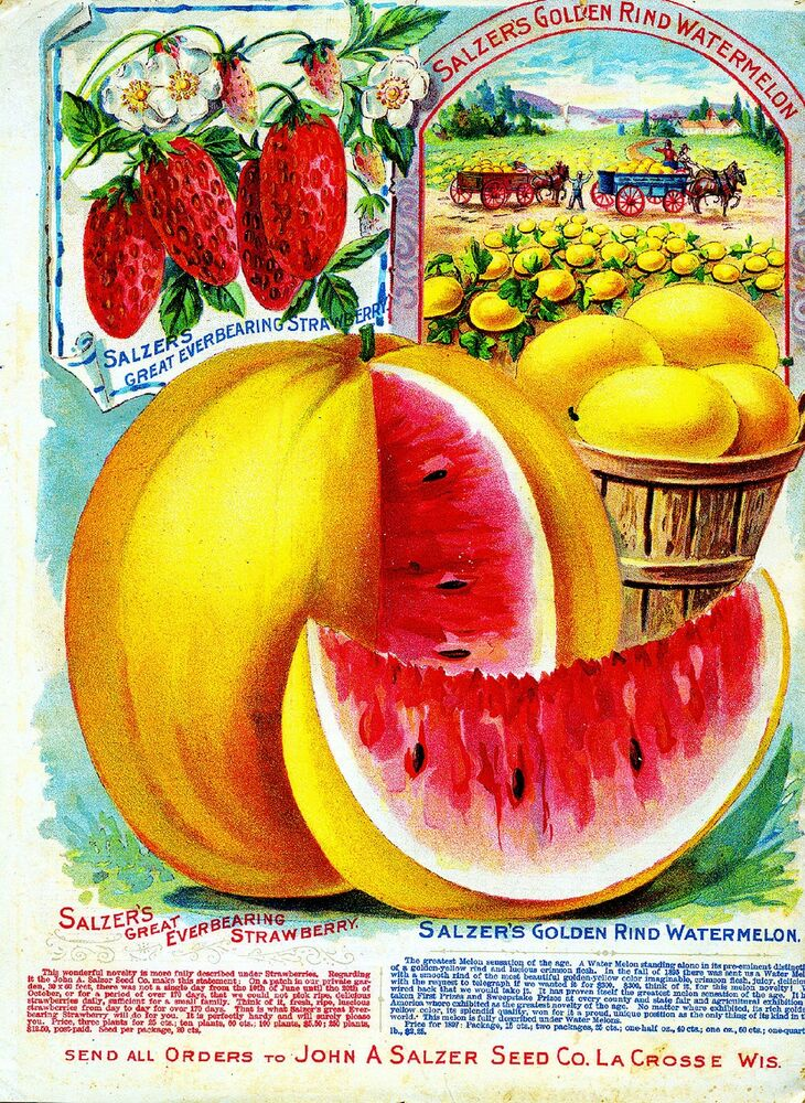 Salzers Vintage Fruit Vegetable Seed Packet Catalogue Advertisement Poster | eBay