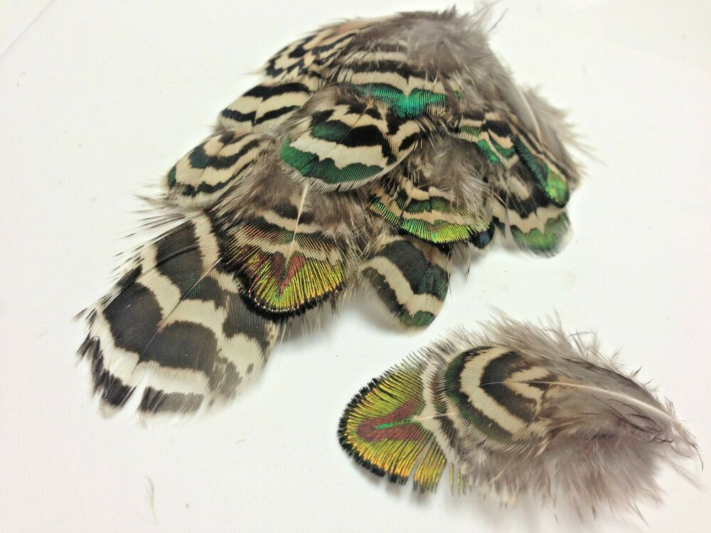 10 varigated mottled peacock body plumage feathers craft for Where can i buy feathers for crafts