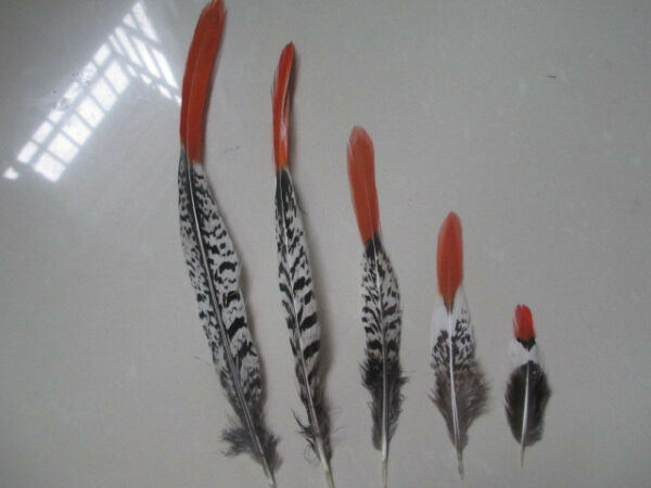 Wholesale rare copper chicken feathers 10-100pcs optional specifications