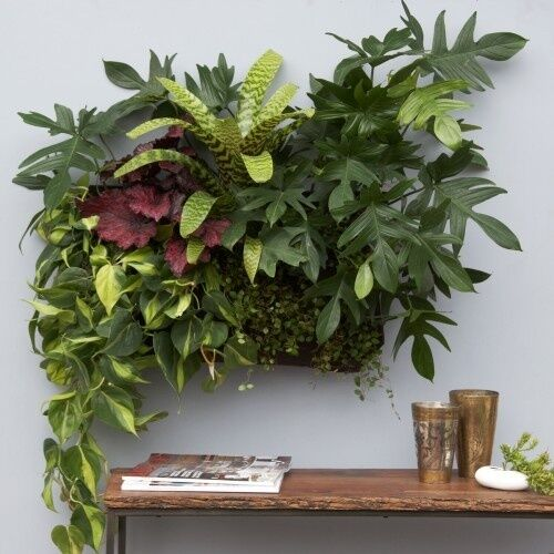 Living wall planter vertical garden hanging wall planter for Wall plants outdoor