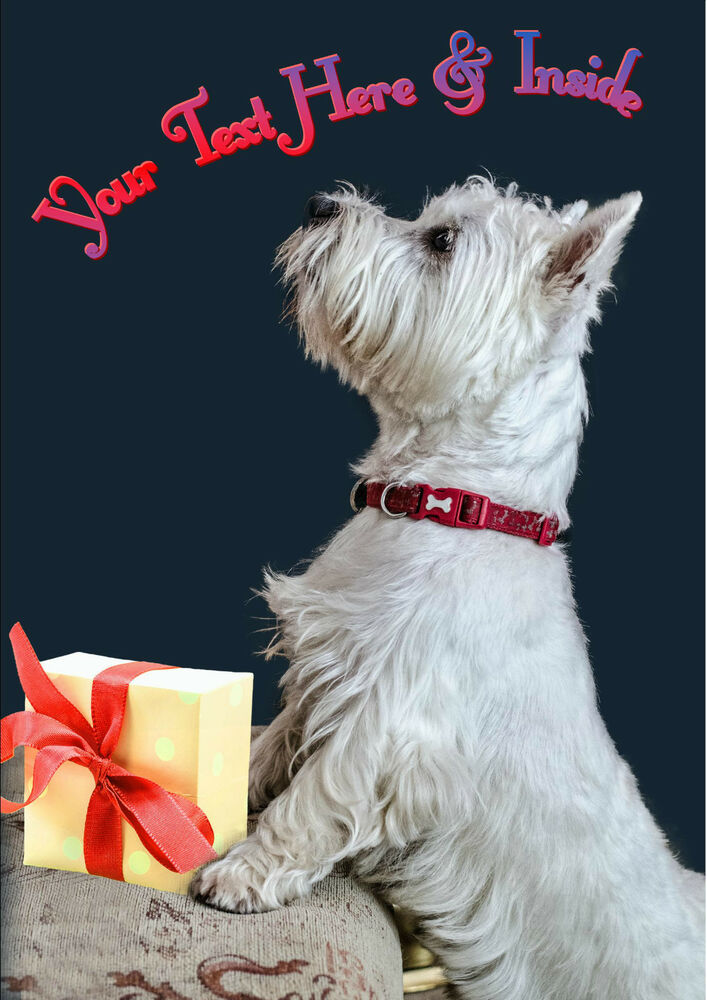 Dog Picture Birthday Cards