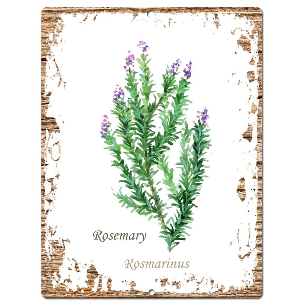 PP0703 Herb Rosemary Plate Sign Home Room Kitchen Store