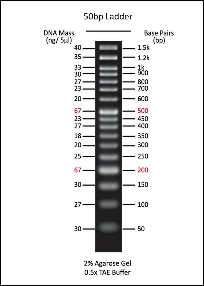 50 Bp Dna Ladder 0 5 Ml Ready To Use Marker For Agarose