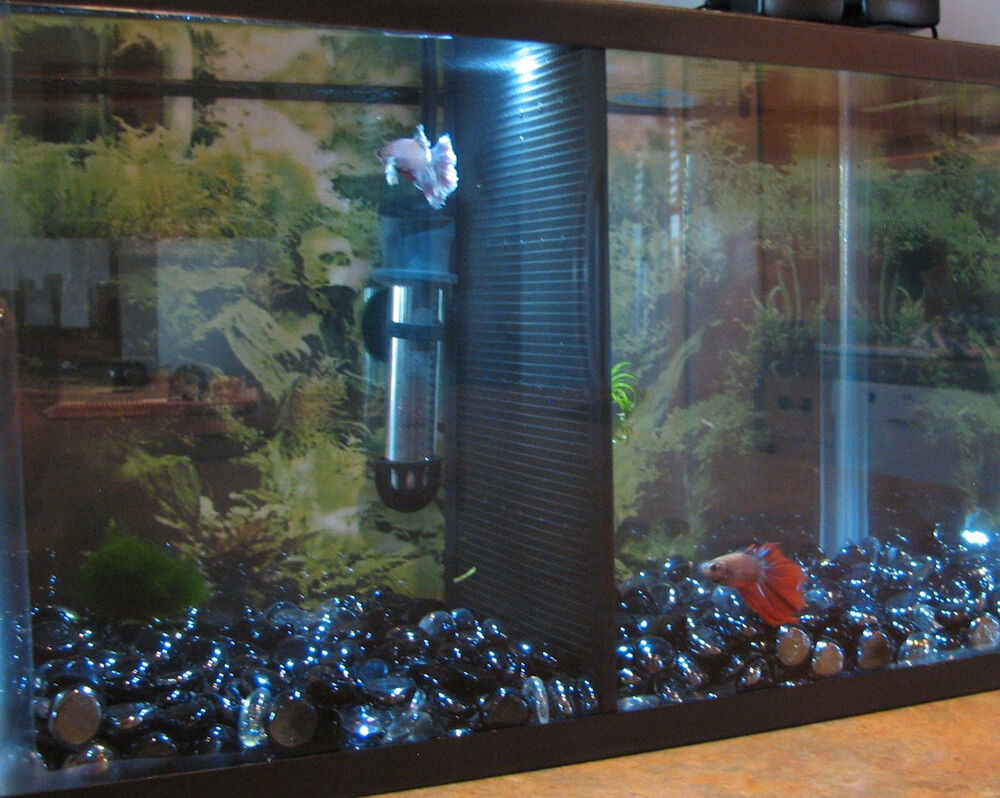 5 gallon fish tank aquarium divider betta ebay for Fish tank divider