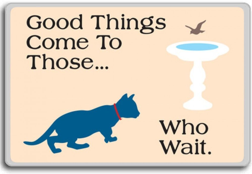 Cat, Good Things Come To Those.. Who Wait.