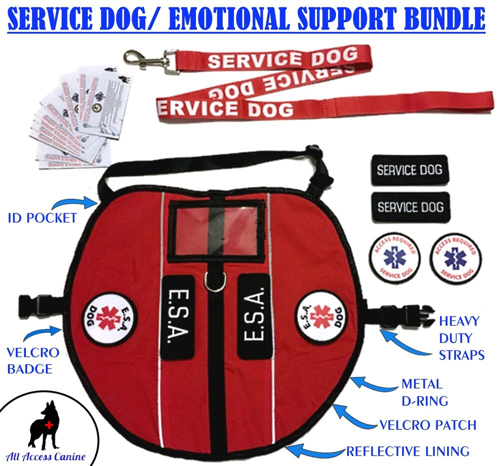 emotional support Information for teachers and a class activity with advice on how best to support someone who is upset.