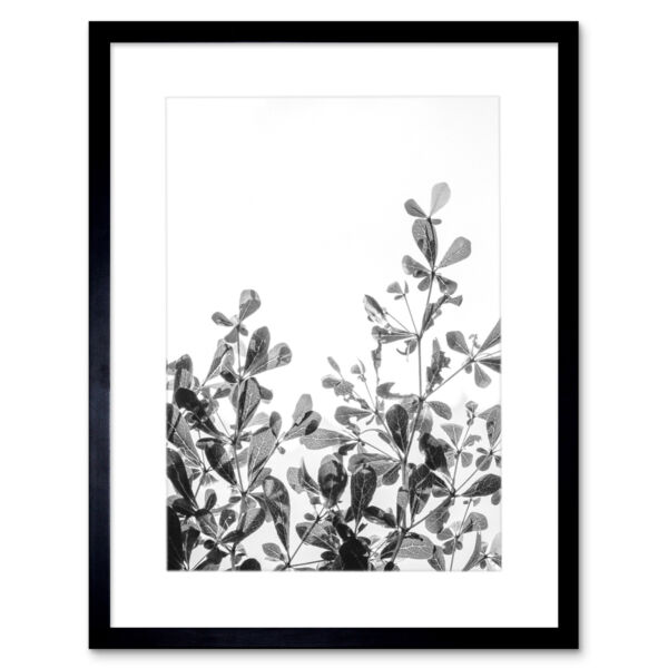 Royaume-UniBlack White Photography Plant Framed Wall Art Print 12X16 In