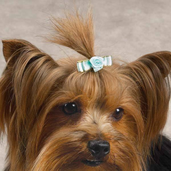 Grooming Bows Small Dogs
