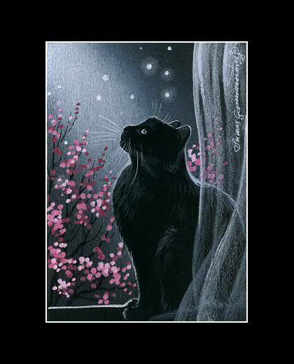 cat spring black personals Find persians for sale in houston on oodle classifieds join millions of people using oodle to find kittens for adoption, cat and kitten listings, and other pets adoption.