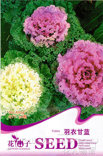 cabbage seed 30 ornamental flowers happy large green