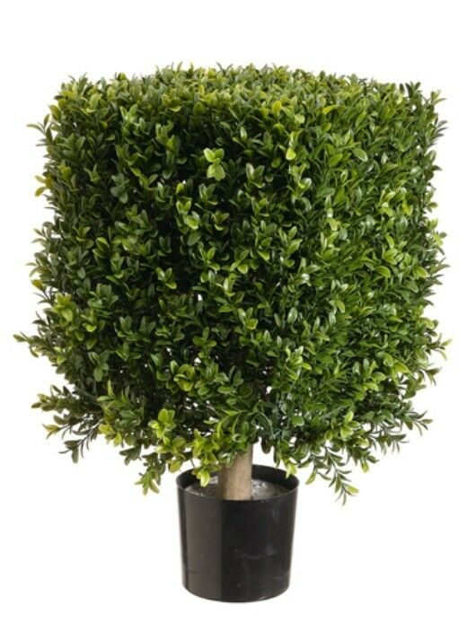 21 Square Boxwood Artificial Topiary In Pot Tree Plant