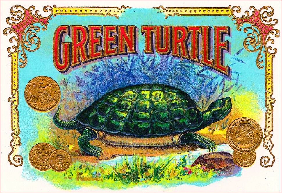 Box Label: 1900 Green Turtle Vintage Cigar Box Tobacciana Label