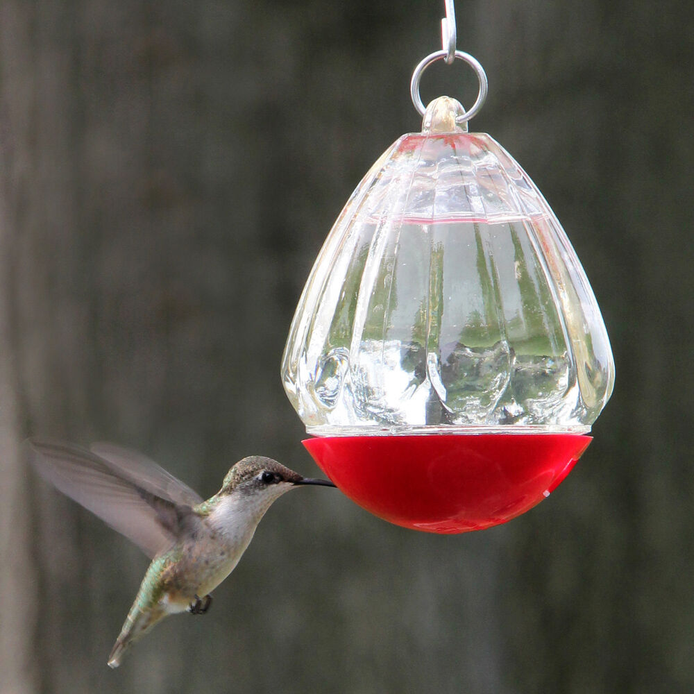 Garden Jewels Round Glass Hummingbird Feeder Ebay