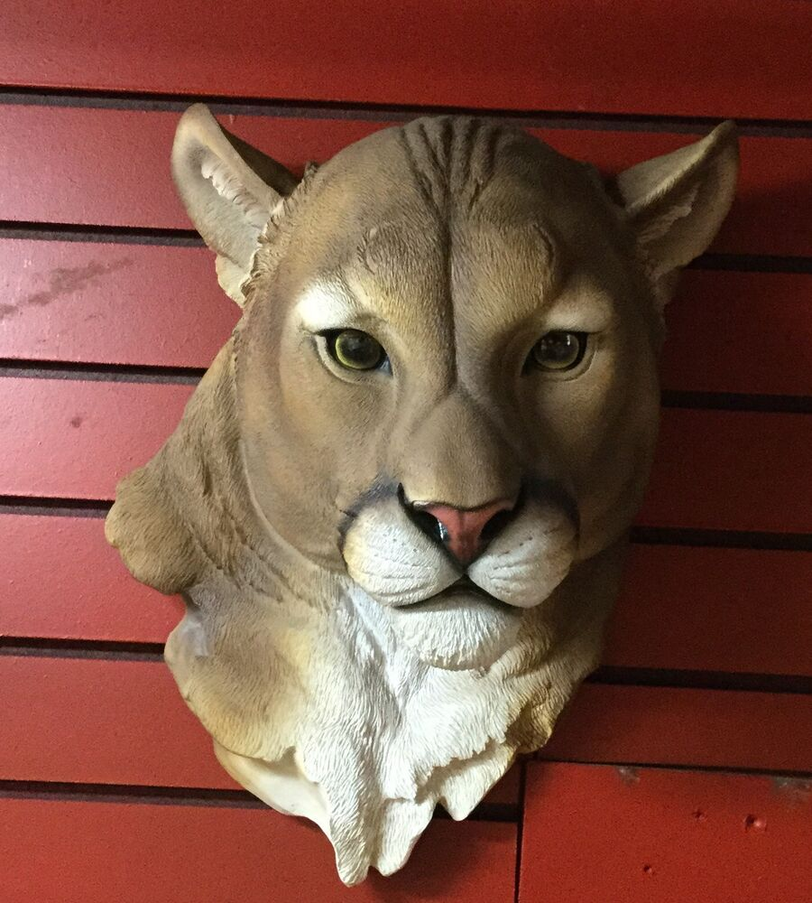 Mountain lion face - photo#31