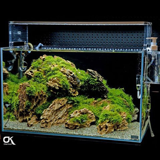 how to add live rock to an established aquarium