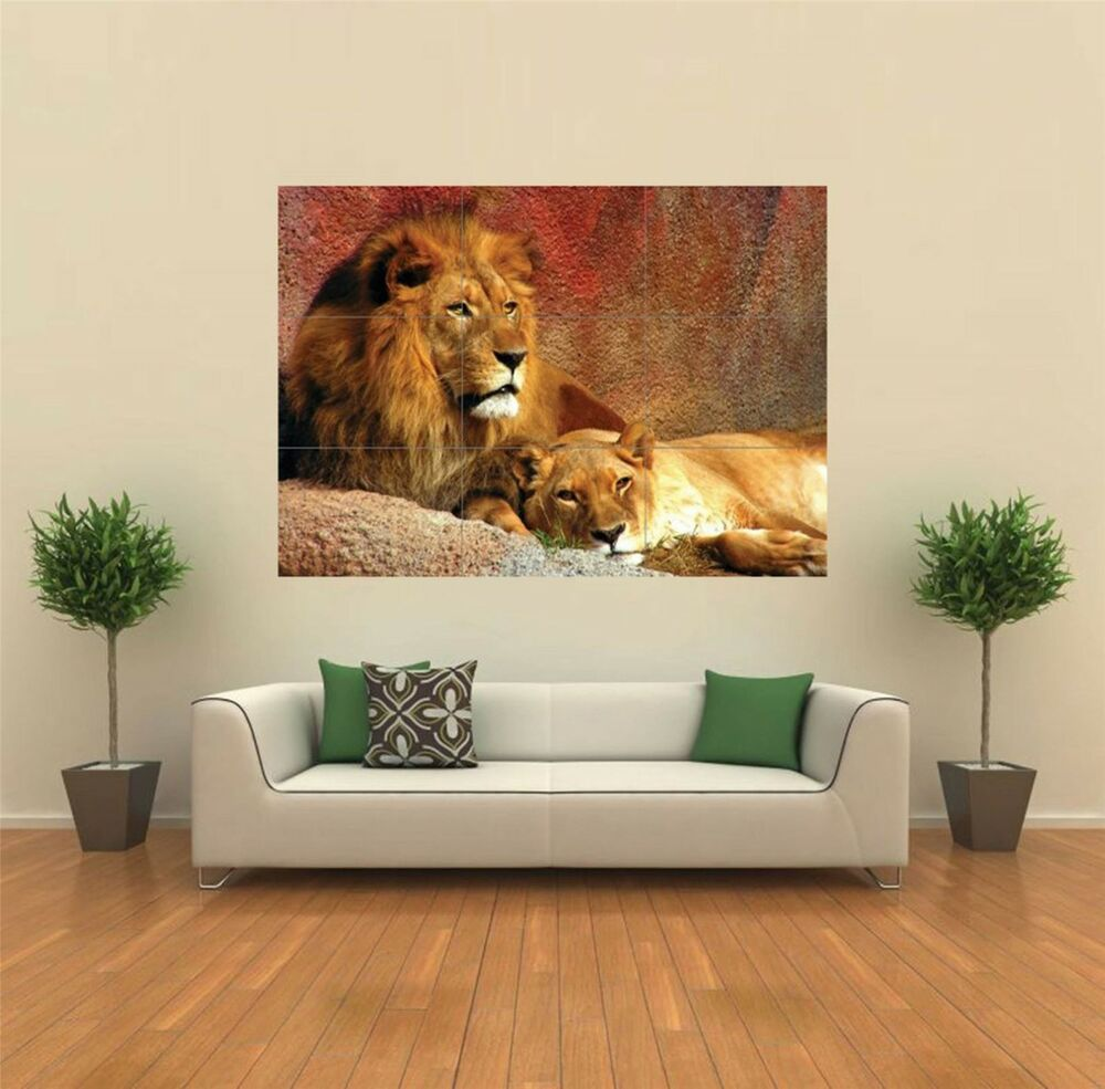 Lion lioness animal new giant large art print poster for Cuadros economicos para salon