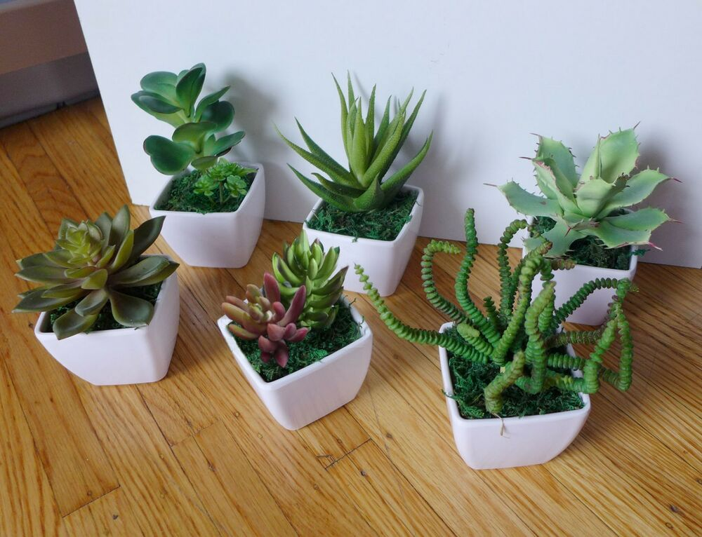 Small potted artificial mini plants home wedding decor ebay for Home decor with plants