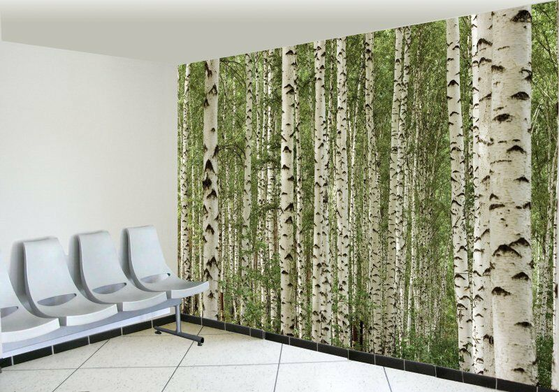 Birch trees wall mural 12 39 wide by 8 39 high ebay for Birch trees wall mural