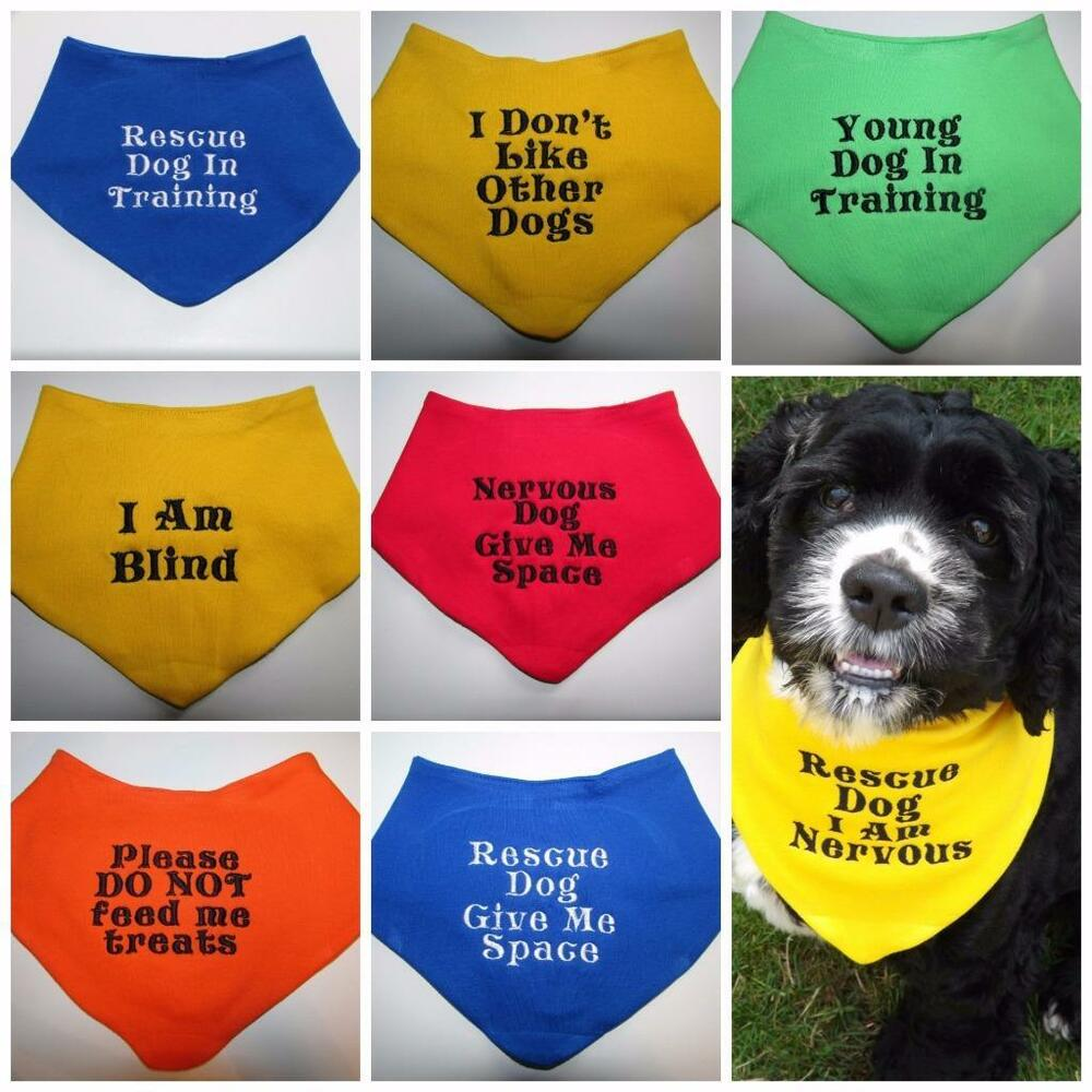Search And Rescue Dog Training Uk