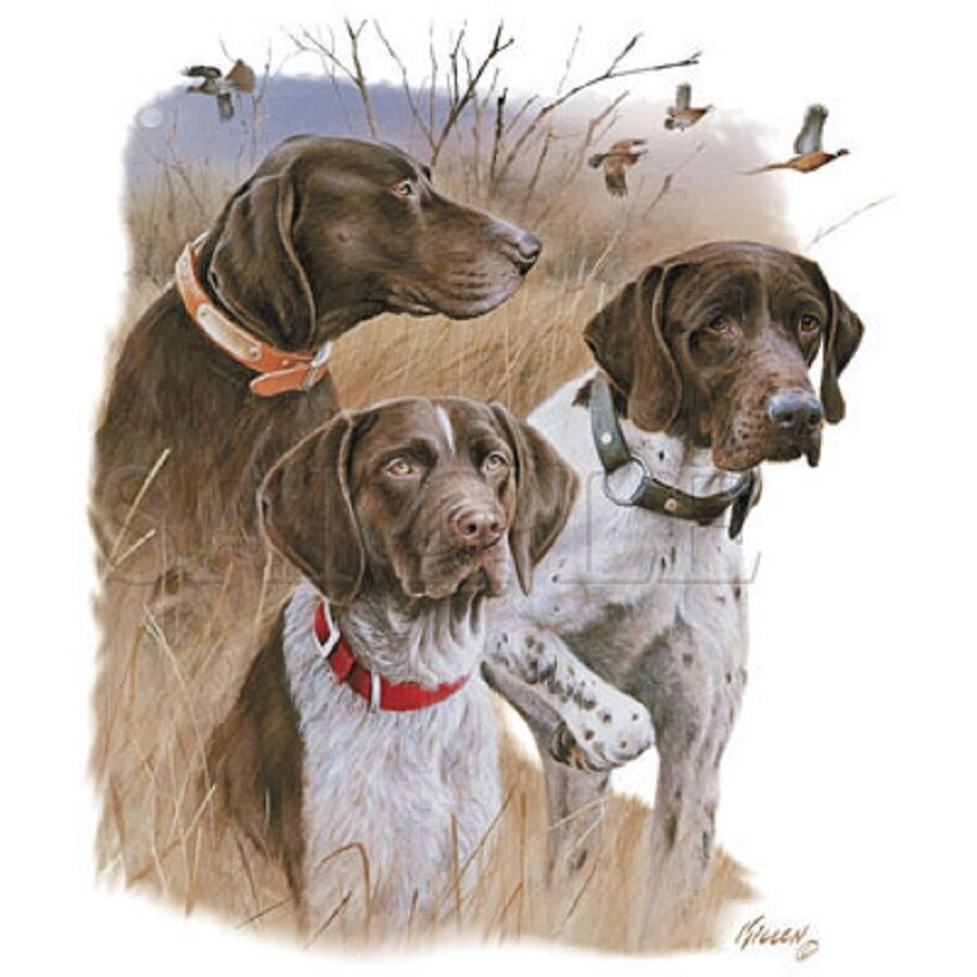 German Shorthair 3 Color Dogs Hunting On One 18 X 22 Inch