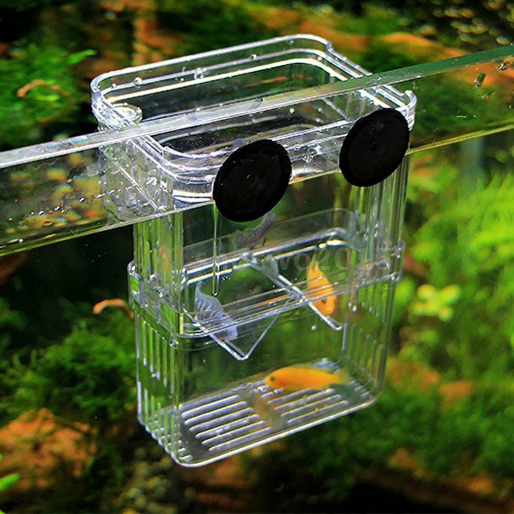 Aquarium fish breeding hatchery young fish incubator for Shrimp fish tank