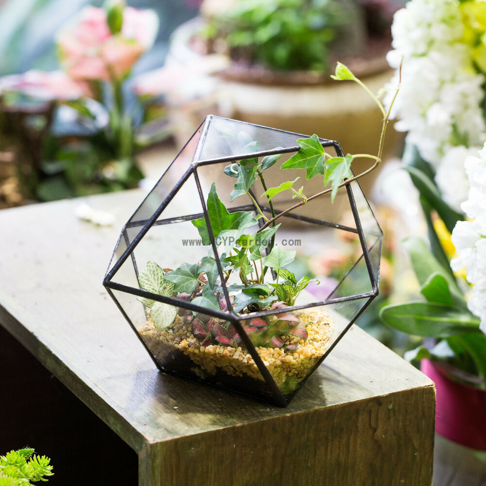 clear glass geometric terrarium crystal ball glass geometric terrarium planter ebay. Black Bedroom Furniture Sets. Home Design Ideas