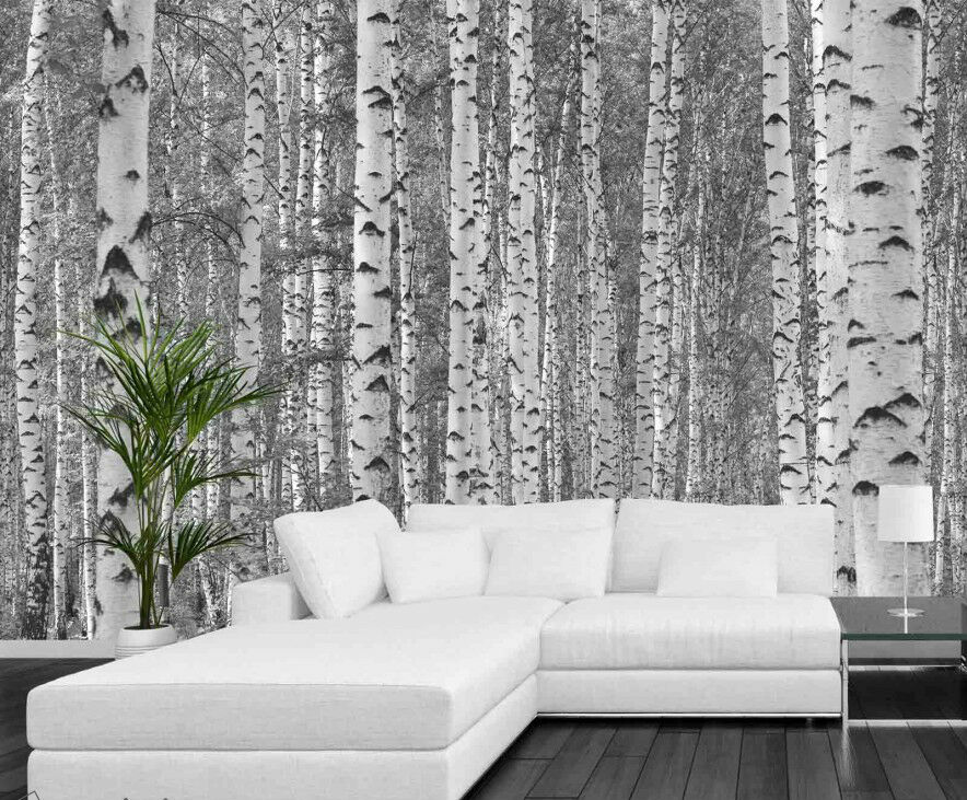 Birch tree forest black and white 12 39 x 8 39 3 66m x 2 for Black tree mural