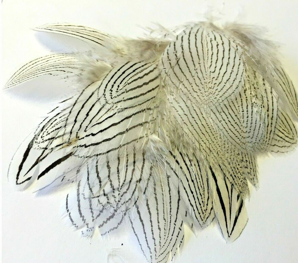 20 silver pheasant black white delicate feathers diy craft for Where to buy craft feathers
