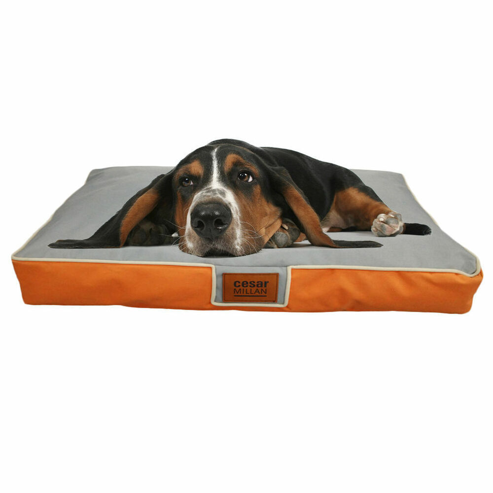 extra large waterproof orthopedic memory foam pet bed. Black Bedroom Furniture Sets. Home Design Ideas