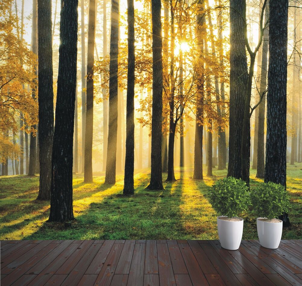 Wallpaper Mural Forest Sunrise Trees Photo Wall Mural