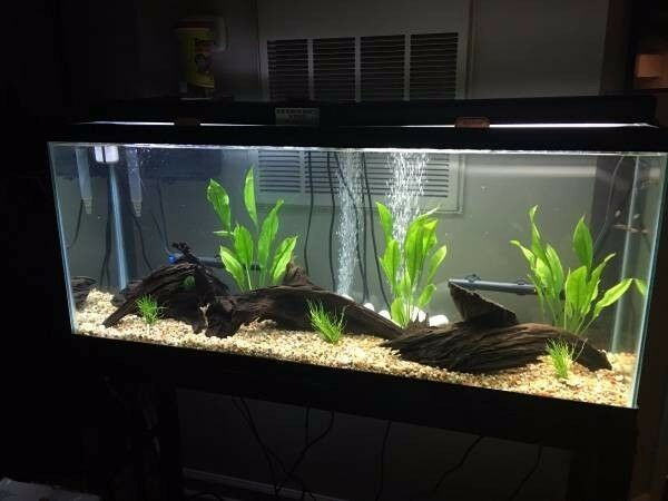 50 gallon fish tank set up ebay for 50 gallon fish tank dimensions