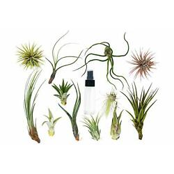 Kyпить Tillandsia Air Plant Variety w/ Spray - 16 Pack на еВаy.соm