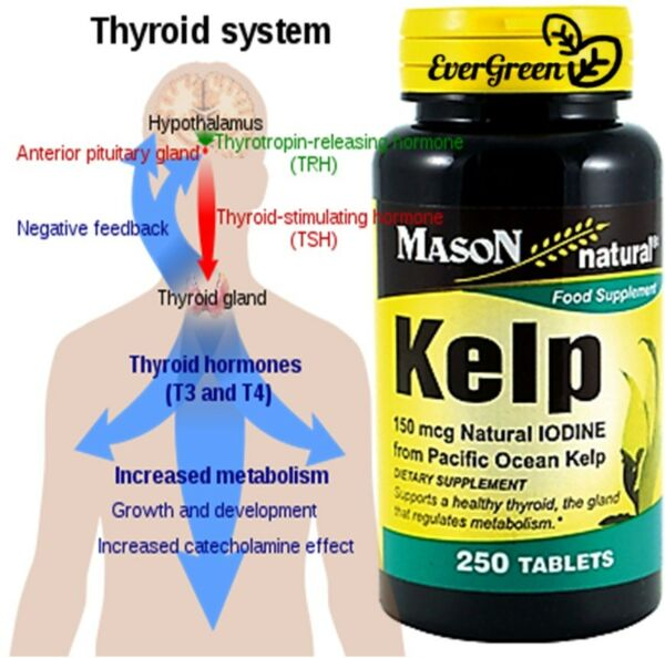 250 TABLETS KELP 150 mcg IODINE healthy thyroid Supplement metabolism CALCIUM