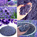100g Natural Lavender Buds Floral Dried Flower Grain Home Garden Decor Accessory
