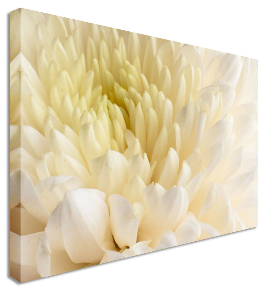 Large Dahlia White Close Up Floral Flower Canvas Wall