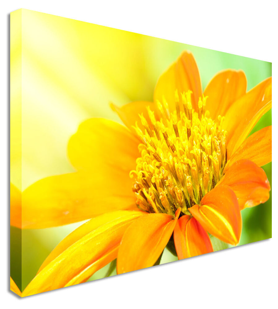 Large Dahlia Yellow Bloom Floral Flower Canvas Wall Art