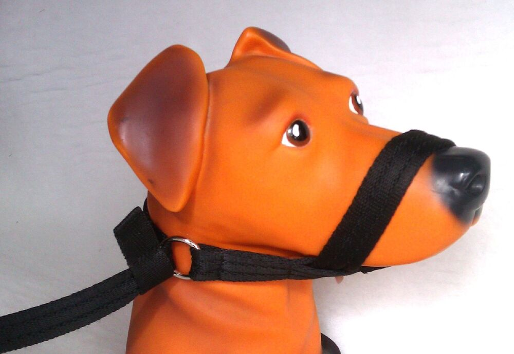 Dog Head Collar Figure Eight