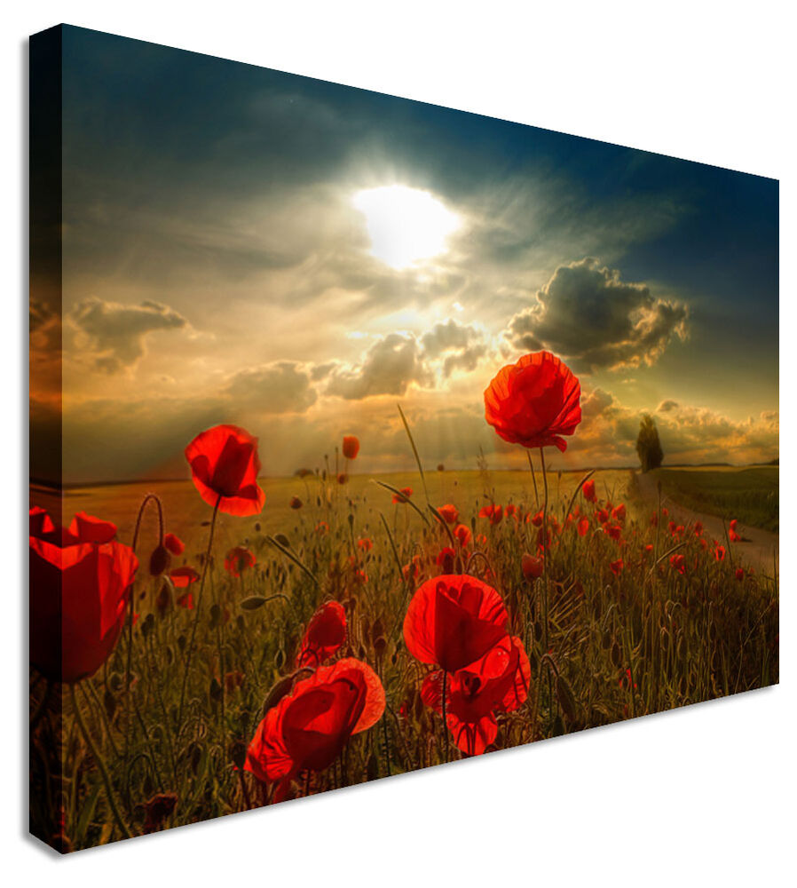Large picture poppies at dawn canvas art cheap print ebay for Buy large canvas prints