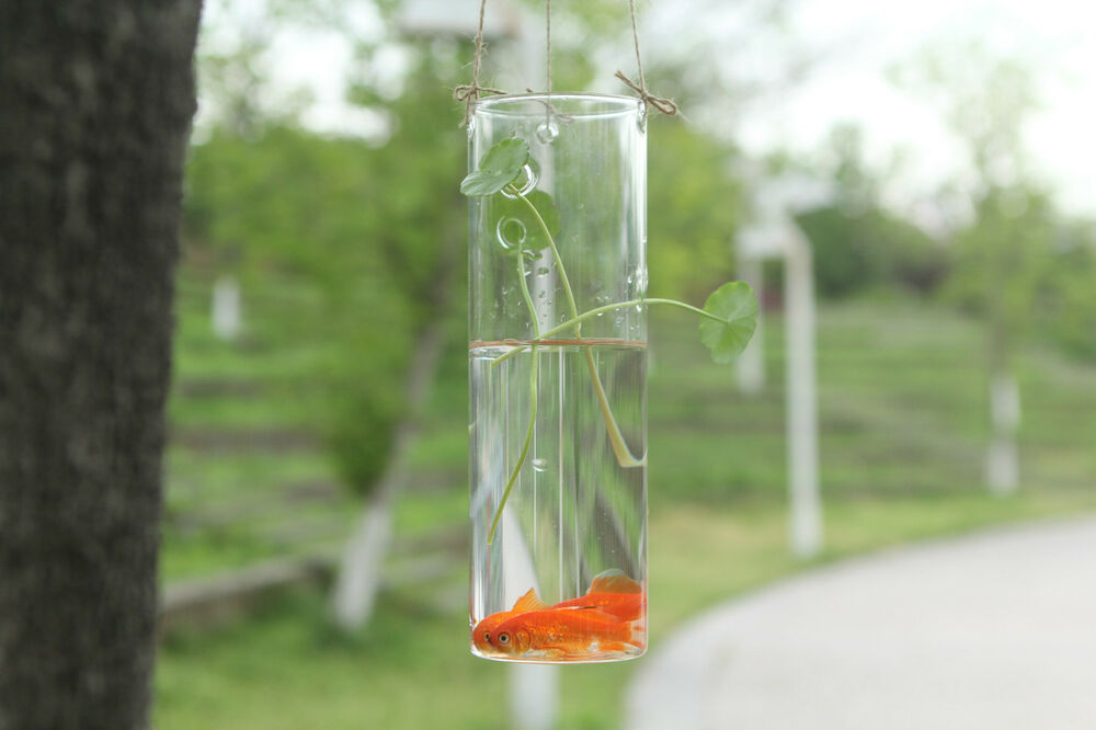 Hanging Table Glass Cylinder Vase For Hydroponic Glass