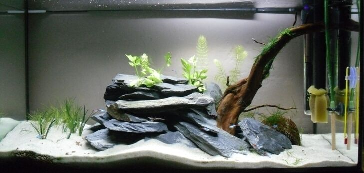 5 Kg Natural Black Slate Stone For An Aquarium Vivarium