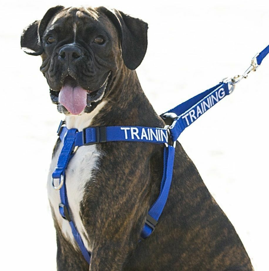 training blue heavy duty non pull dog harness front clip optional lead sets ebay. Black Bedroom Furniture Sets. Home Design Ideas